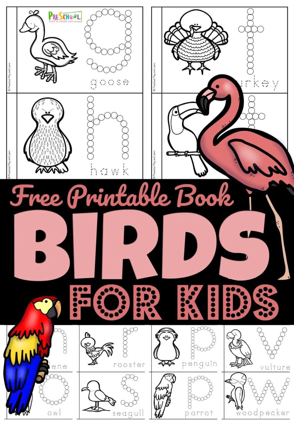 medium resolution of FREE Birds for Preschoolers Printable Book