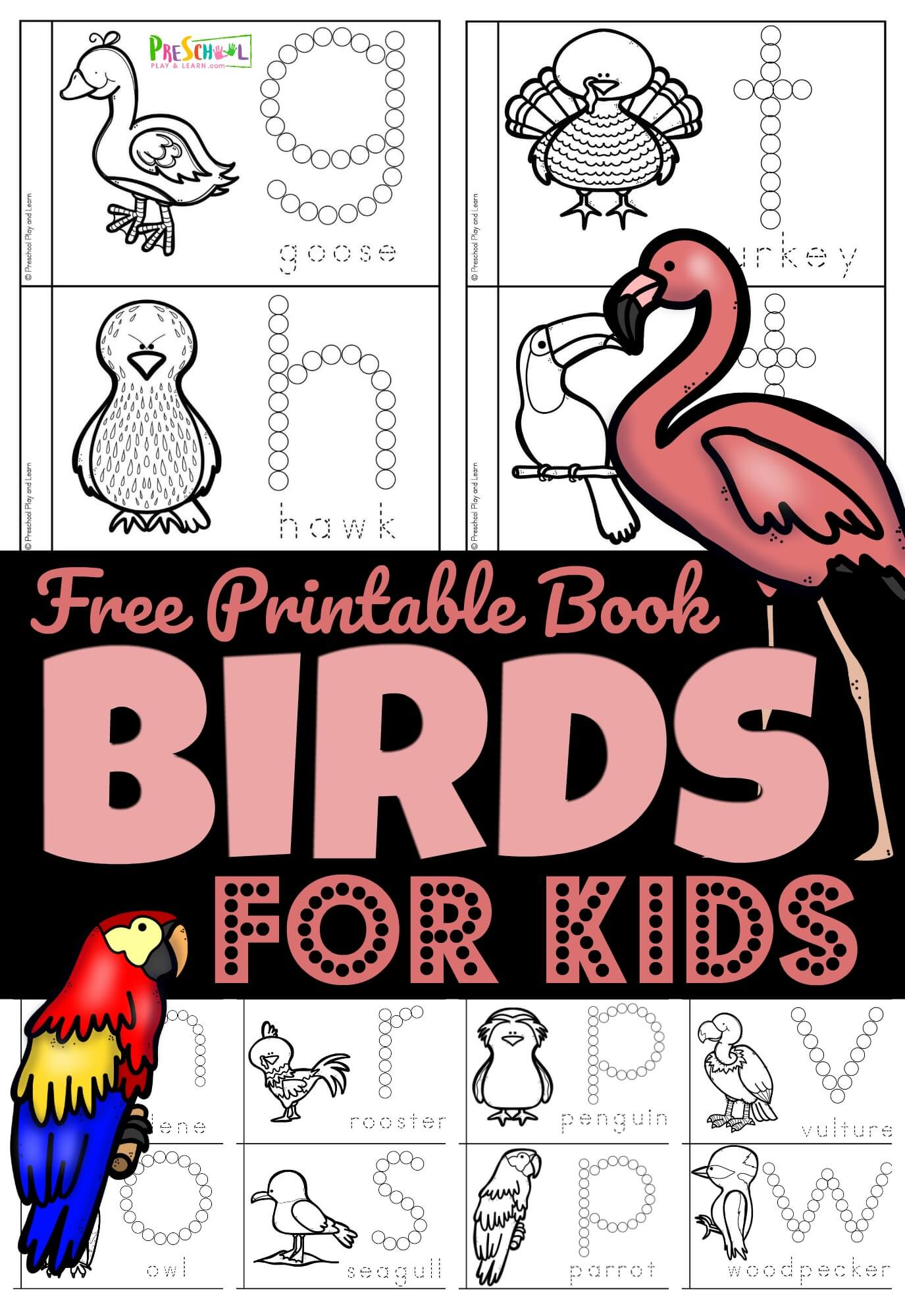 hight resolution of FREE Birds for Preschoolers Printable Book