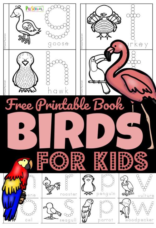 small resolution of FREE Birds for Preschoolers Printable Book