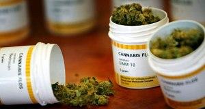 Cannabis medicinal. (Foto/Suministrada)