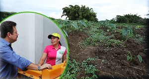 El proyecto se convertirá en una atracción agroturistica. (Foto/suminsitrada)