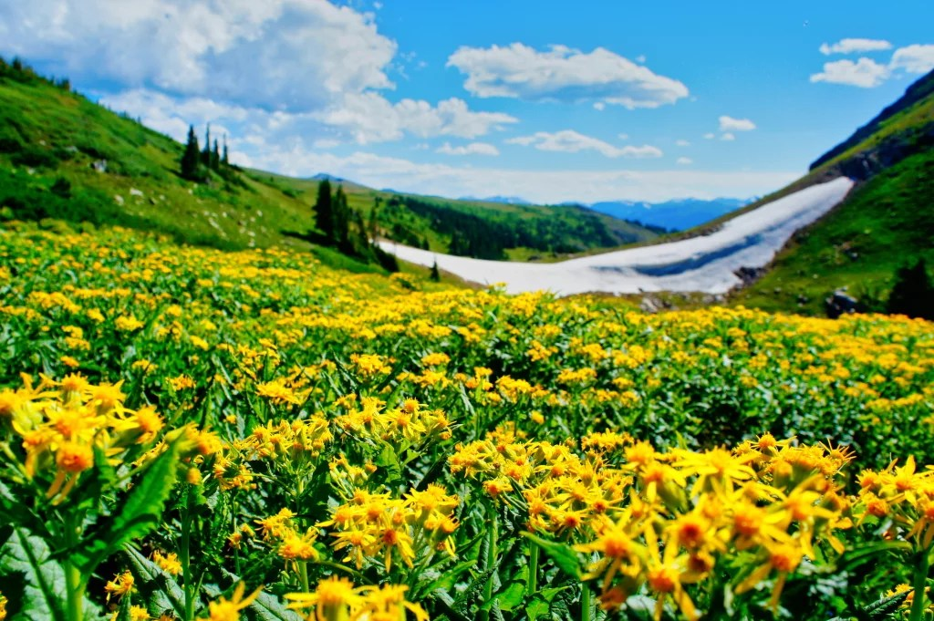 Wildflowers & Wildlife 04