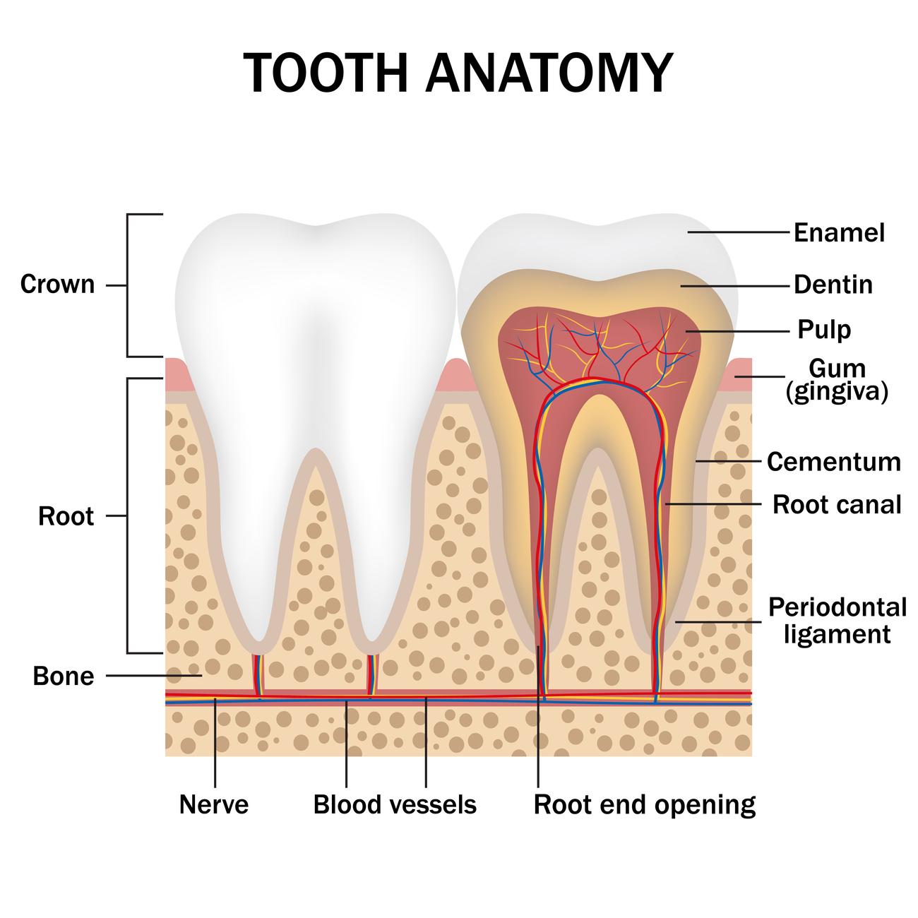 Surprising Causes Of Tooth Enamel Erosion