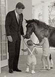 macaroni-jfk-pony