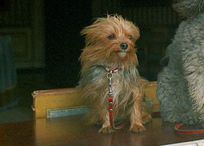 Richard Nixon's Yorkshire Terrier, Pasha