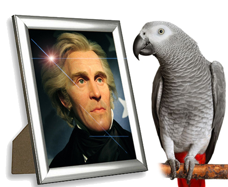 Polly Want a WHAT?! Andrew Jackson's Pet Parrot