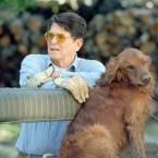 Ronald Reagan's Golden Retriever, Victory
