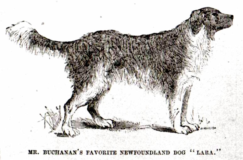 James Buchanan's Newfoundland, Lara