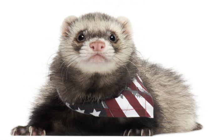 Presidential Pet Trivia – Week of August 24, 2020