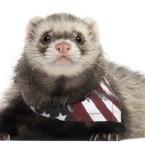 Presidential Pet Trivia – Week of May 22, 2017