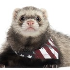 Presidential Pet Trivia – Week of April 19, 2021