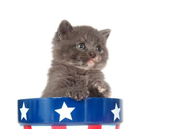 Presidential Pet Trivia – Week of March 30, 2020