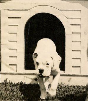 Warren Harding's Old Boy