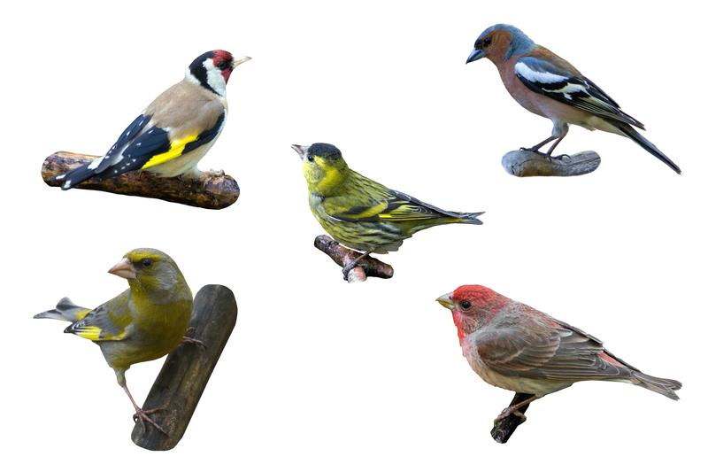 Woodrow Wilson's Songbirds