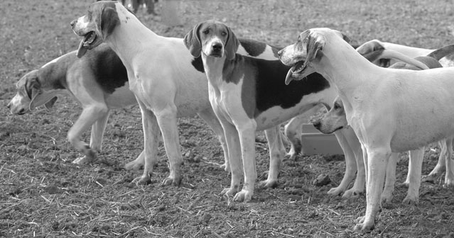 Grover Cleveland's Foxhounds