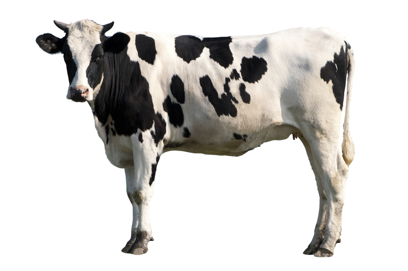 William Henry Harrison's Sukey Cow
