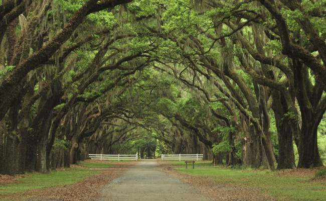 Things To Do In Savannah Vacation Guide Presidents