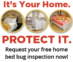 get a free bed bug inspection
