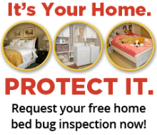 What Kills Bed Bugs Instantly Presidio Pest Management