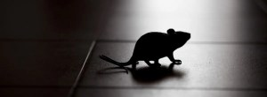 mouse in the dark