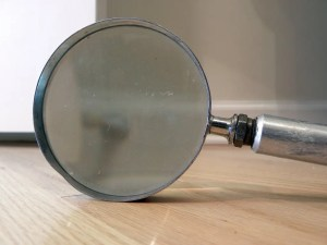 Bedbug magnifying glass Presidio Pest Management