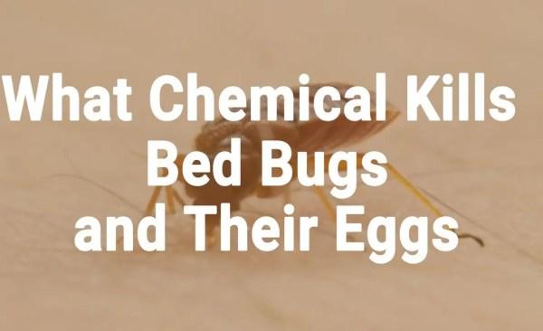 Kills Bed Bugs - Chemicals - Presidio Pest Management
