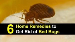six home remedies Bedbugs Presidio Pest Management