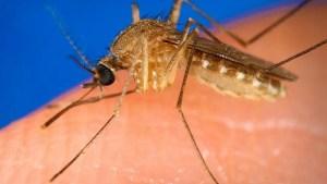 mosquito misconceptions Presidio Pest Management