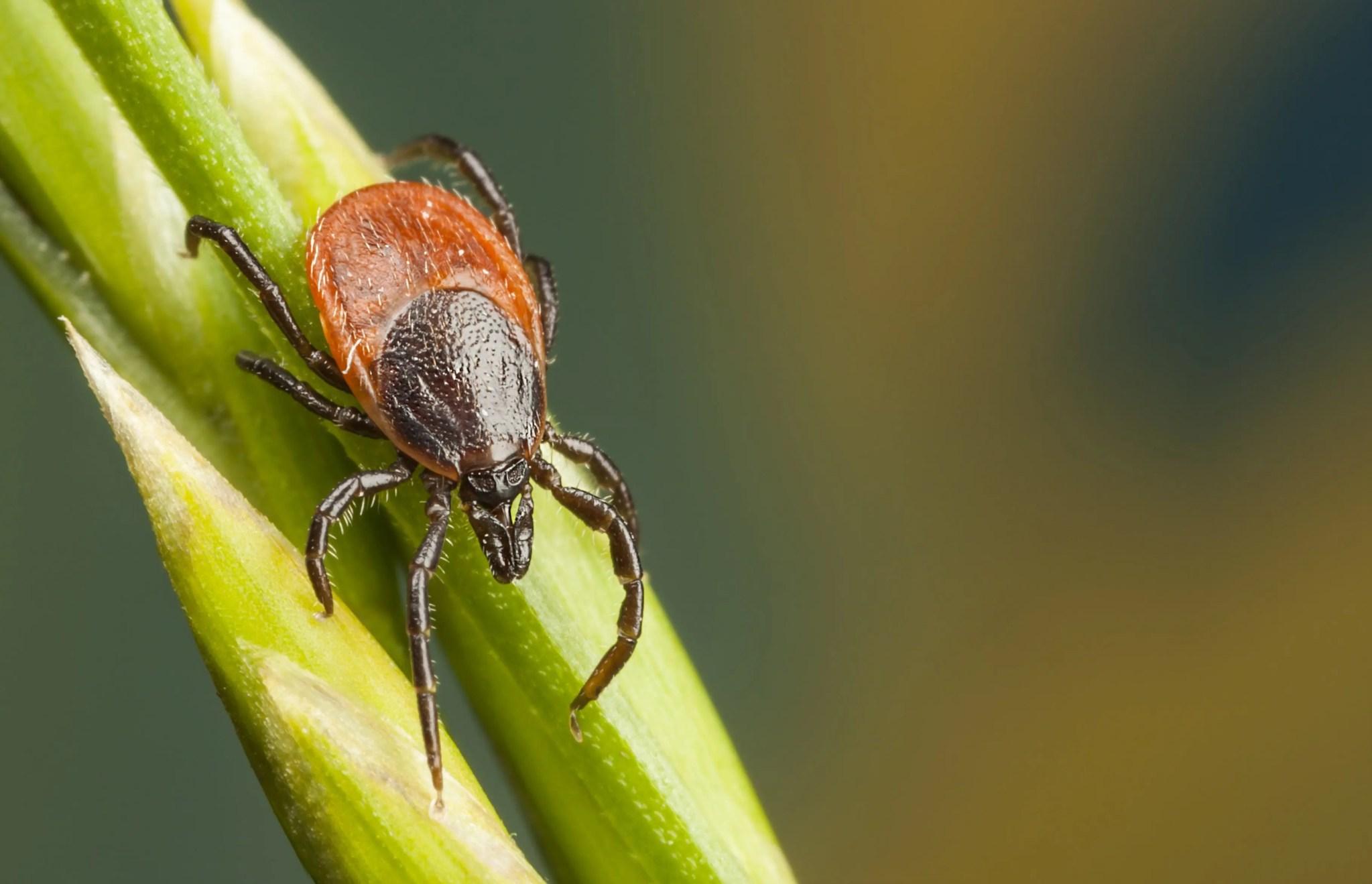 Presidio Pest Management ticks
