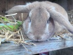 Thumper lives with Shannon Gray in Whitehills. This delightful rabbit is our canvas winner this week