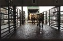 The new cattle movements recording system comes into place at the end of the year.