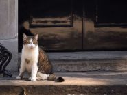 Larry the cat in Downing Street