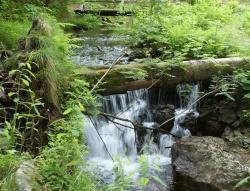 """Die Kombination aus Naturerlebnis, Fachinformationen und spirituellen Impulse machen die Führungen der Reihe """"Nationalpark und Schöpfung"""" zu einem besonderen Erlebnis. (Foto: NPV Bayerischer Wald)"""