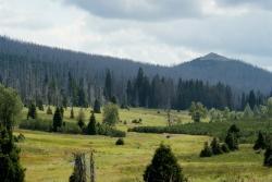 Lusenblick mal anders auf dem Weg nach Fürstenhut: Die grenzüberschreitenden Wanderungen in den Nationalpark Sumava eröffnen neue Perspektiven (Foto: NPV Bayerischer Wald).