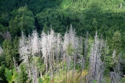 """Borkenkäfernest mitten im dichten Waldbestand – schädlicher Störenfried, der durch Klimawandel noch gefördert wird, oder Chance für ein Waldmanagement mit hoher Artenvielfalt? Diese und viele weiteren Fragen sind Thema des Vortrags """"Das Unerwartete erwarten"""". (Foto: Prof. Dr. Rupert Seidl)"""