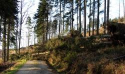 """""""Gonzalo"""" entwurzelte nur vereinzelt lebende Bäume – wie hier an der Hochfichtstraße östlich vom Kiesruck. Nur im Bereich Scheuereck gab es einzelne kleine Gruppenwürfe mit bis zu 25 Bäumen. (Foto: NPV Bayerischer Wald)"""
