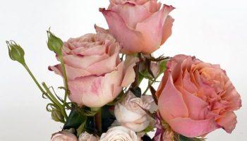 Zum Valentinstag am 14. Februar: Mit Blumen Freude schenken - auch für die Blumenarbeiterinnen /n terre des hommes ruft zum Kauf von fair gehandelten Blumen auf