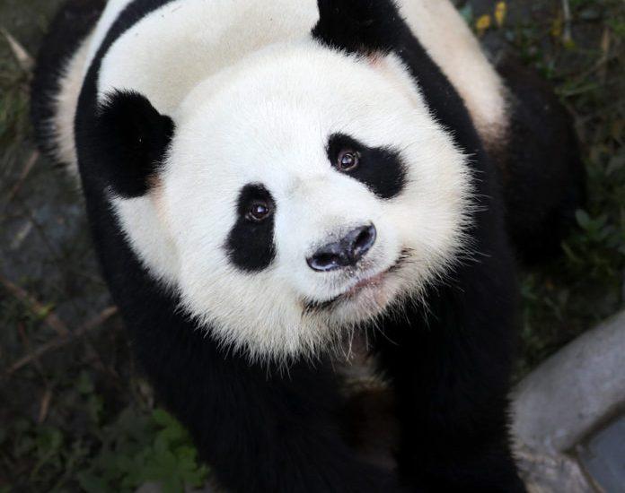 #PandaLounge