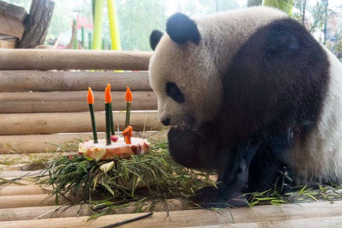 Meng Meng ,Berlin,Zoo Berlin,Panda