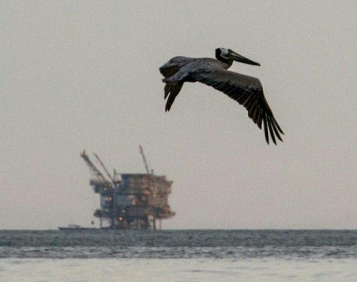 Florida,News,Meeresschutzgebiet,Öl,Gasförderung,Ryan Zinke