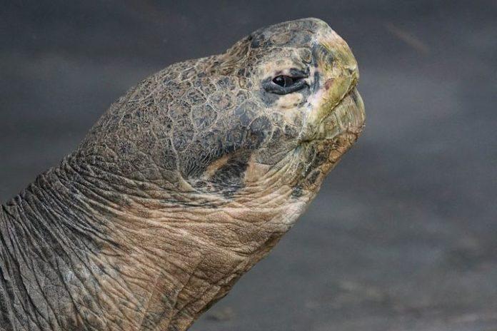 Galápagos-Inseln, Tourismus,Urlaub,Natur,Klimaschutz,News,Meerechsen, Schildkröten,Galápagos