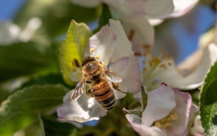 Agrar, EU, Biene, Imker, Naturschutz, Weltbienentag, Pflanzenschutzmittel, Politik, Umwelt, Verbände, Wachtberg