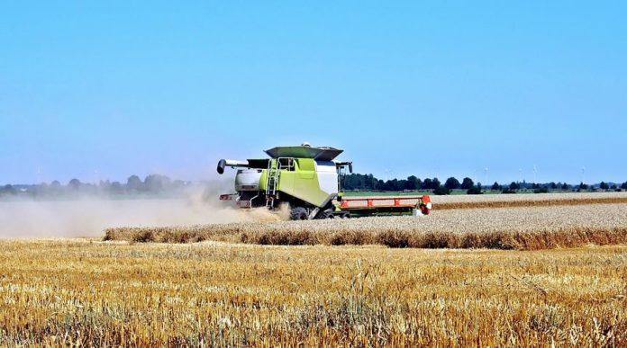 Bauernverband fordert eine Milliarde,Bauernverband,Nachrichten,Ernteausfälle,Ernten, Julia Klöckner,Politik