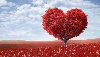 #Valentinstag,Brauchtum,News,Liebe,Tag der Verliebten,Nachrichten