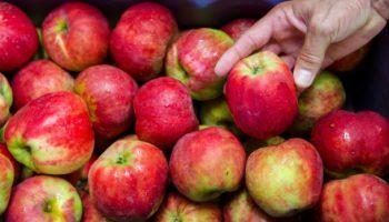 Äpfel,Stiftung Warentest,Apfelschorle
