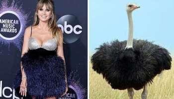 Heidi Klum,American Music Awards,Los Angeles, Star News, Medien