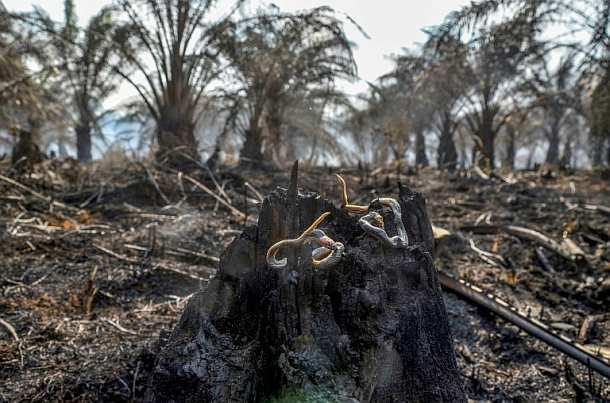 Indonesien,Palmöl,Biodiesel ,Presse,News,Medien,Aktuelle