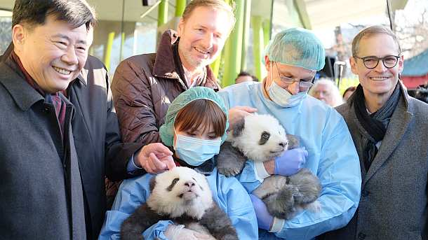 Zoo Berlin, Presse,News,Medien,Aktuelle,Panda
