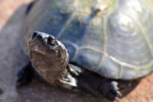 Schildkröten,Galápagos,Presse,News,Medien,Aktuelle