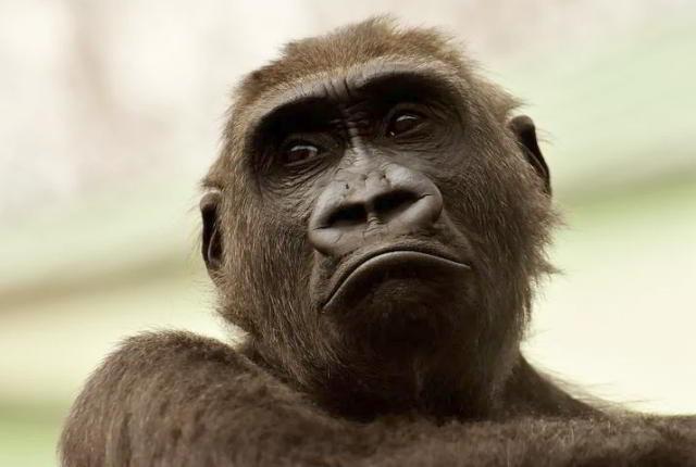 Affen,Menschen,Affen_Embryos,Presse,News,Medien